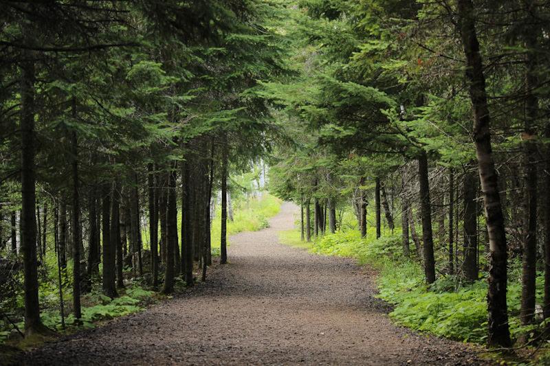 Voiries forestières